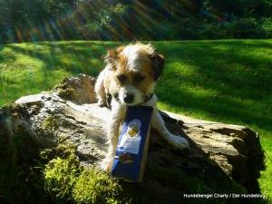 Bild: Hundebengel Charly mit Lamm-Reis-Keksen
