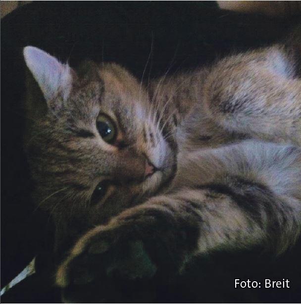 Bild: Katze mag Katzenkekse