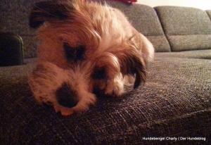 Bild: Hundebengel Charly knuspert selbstgebackene Kekse