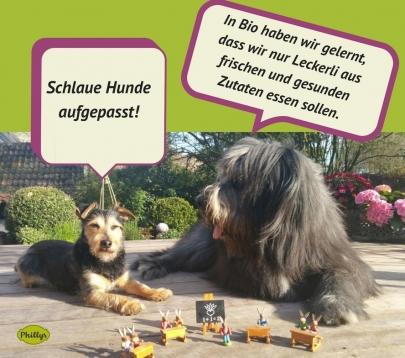 Gesunde Leckerli für Hunde