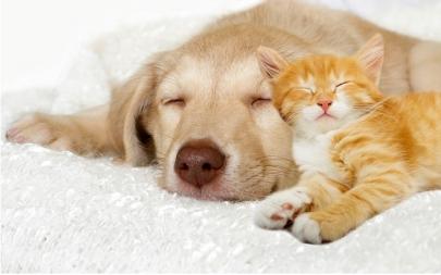 Hund und Katz sind entspannt dank Bachblüten