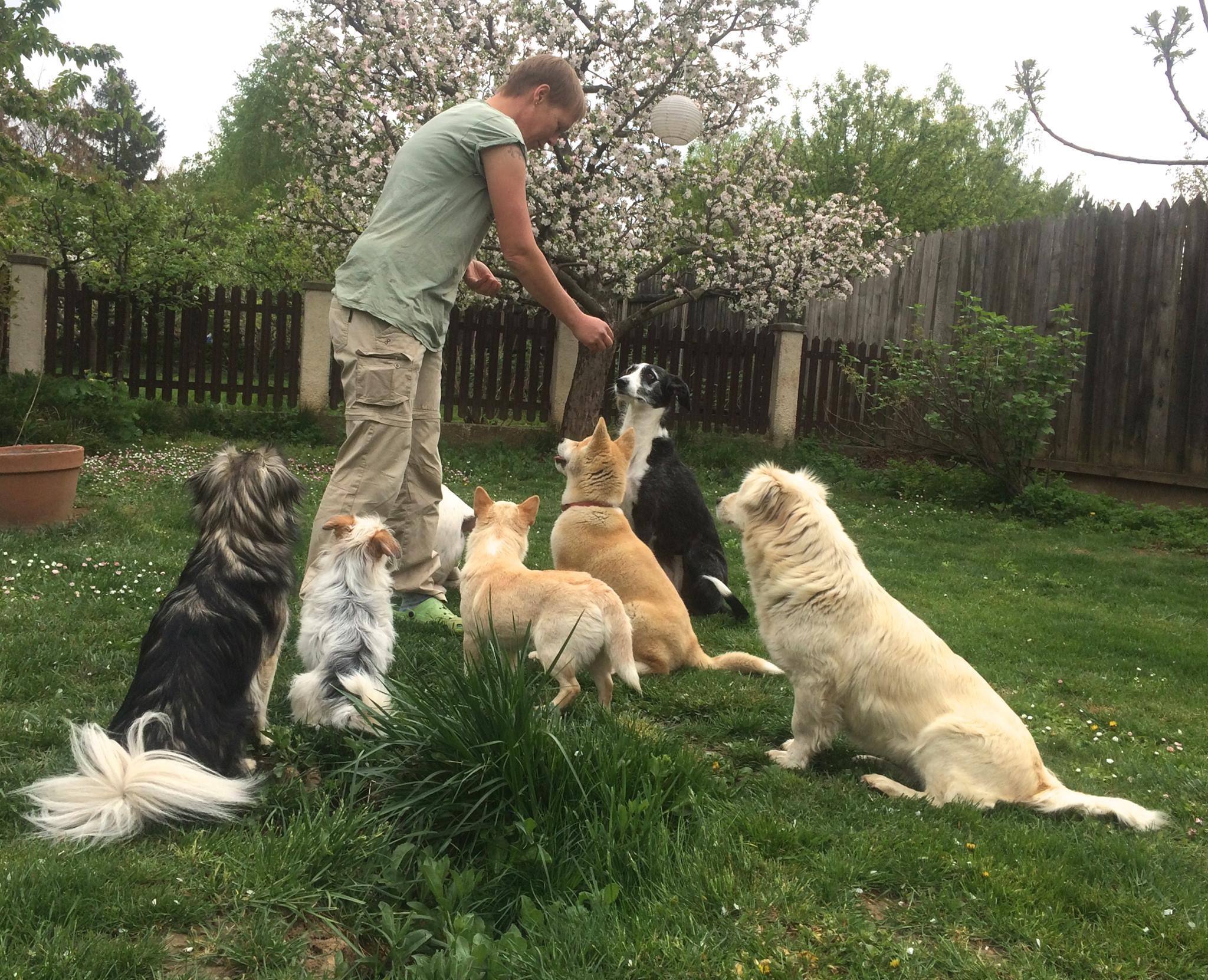 Hundetrainerin empfiehlt Phillys Fleisch-Mini´s